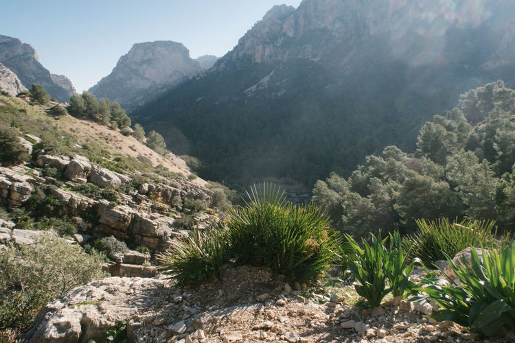 Andalusia Hawk Beauty In Nature Caminito Del Rey Clear Sky Day Growth High Angle View Landscape Mountain Mountain Range Nature No People Outdoors Plant Scenics Sky Sunlight Tranquil Scene Tranquility Tree