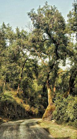 Bizkaia Barakaldo Euskalherria Errekatxo Plant Tree No People Nature Day Growth Outdoors