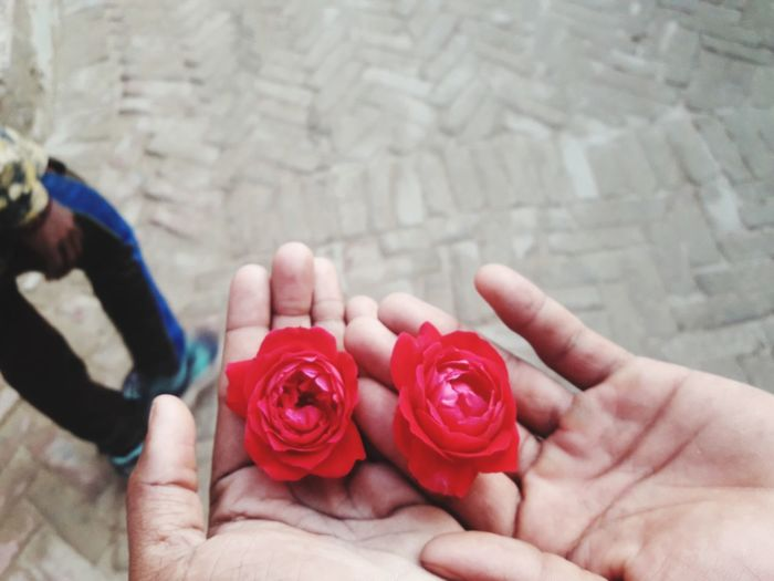 Cropped image of hand holding red rose