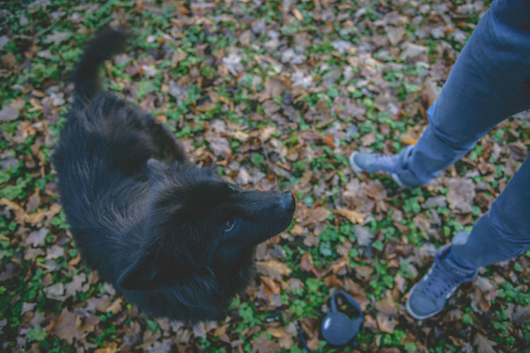 Animal Themes Black Dog Close-up Dog Domestic Animals Eurasier Low Section Mammal Nature One Animal Outdoors Pets My Year My View