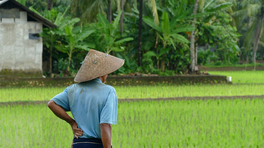 ASIA Asian Culture Dreaming Nature Travel Travel Photography Asian Style Conical Hat Culture Farmer Field Landscape One Person People Real People Rice Field Rural Scene