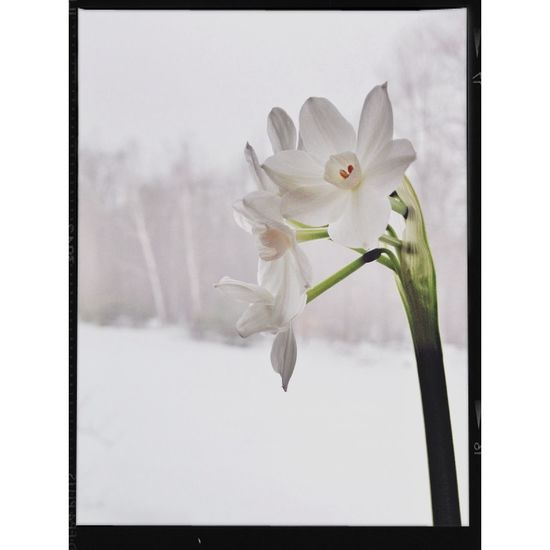 White inside and out Flowers Still Life Winter Snow