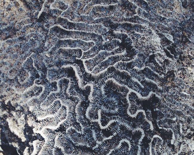 Fossil Pattern On Rock