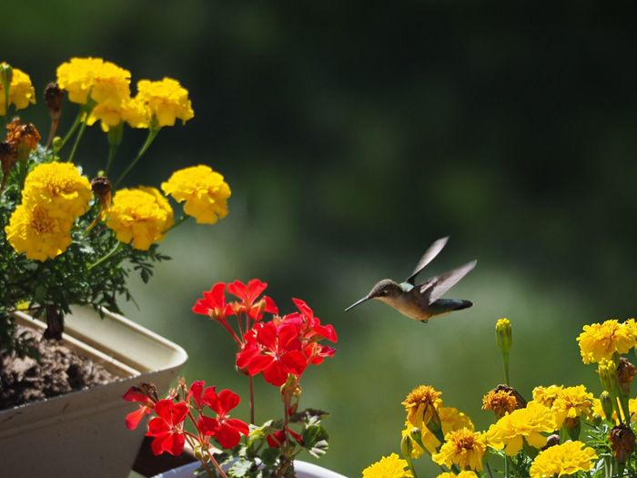 View of bird by flowers