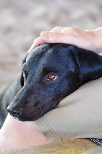 Family member ❤️ #tenderness EyeEm #animal #MyDog #petphotography #love Human Hand Pets Dog Close-up