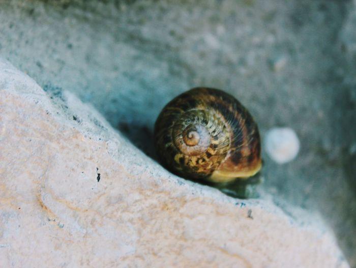 Coiled Shell Fibonacci Snail Nature