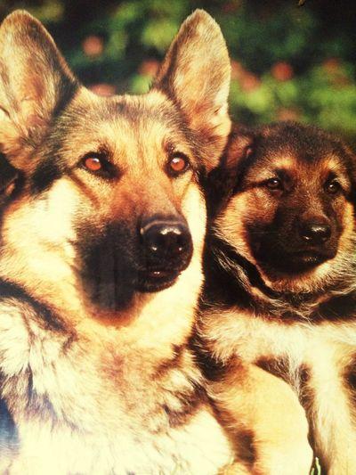 Dog beautiful Dog