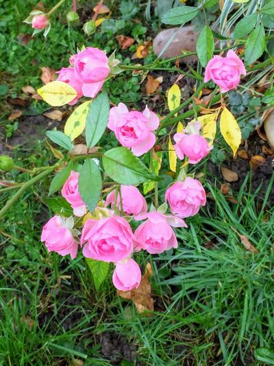 Plant Flowering Plant Beauty In Nature Growth Pink Color Fragility