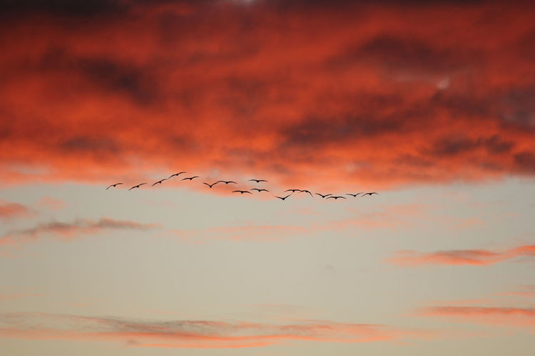 Birds flying in sky during sunset