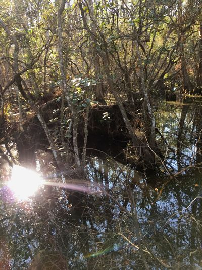 Tree Nature Tranquility Outdoors No People Tranquil Scene Beauty In Nature Water Growth Forest Reflection Day Branch Sunlight Scenics Lake EyeEmNewHere