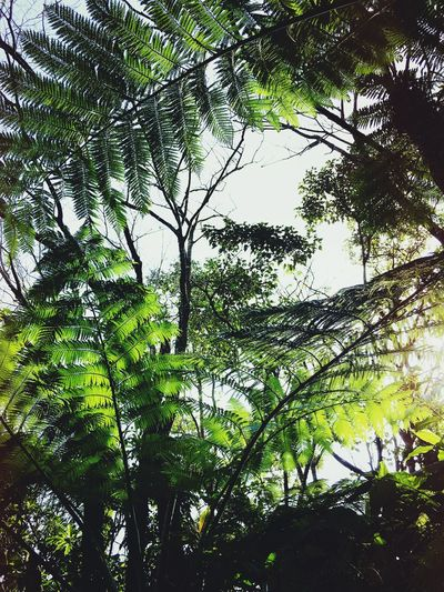 Nature Growth Tree Low Angle View Green Color Leaf Beauty In Nature No People Outdoors Backgrounds Branch Day Sky Freshness Fern Old Plants