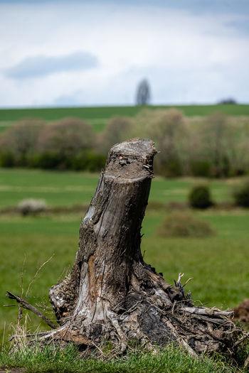 Close-up of driftwood on tree stump on field
