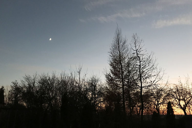 Astronomy Bare Tree Beauty In Nature Crescent Half Moon Moon Nature Night No People Outdoors Scenics Silhouette Sky Tranquil Scene Tranquility Tree