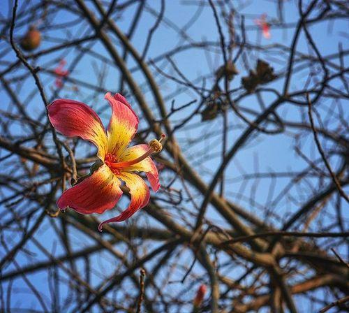 Gagans_photography Picsagram Picoftheday Flowery Goodmorning LoveNature