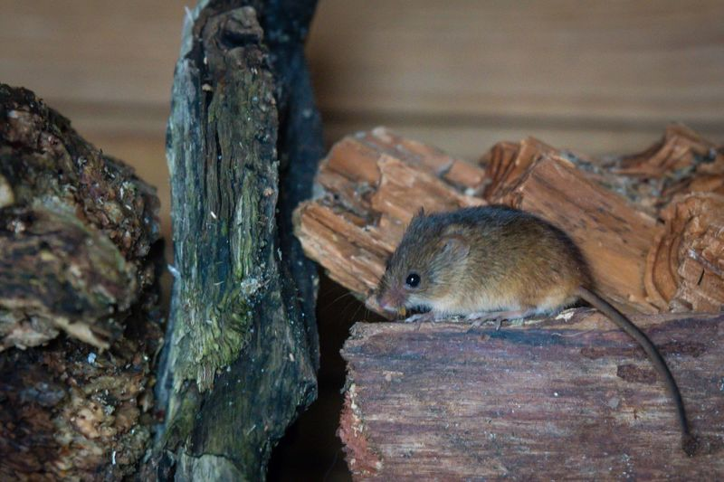 🐭 Mouse Field Mouse Garden Photography Wildlife One Animal Animal Wildlife Animals In The Wild Squirrel Mammal No People Animal Themes Outdoors Nature Close-up