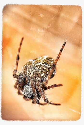 Nature EyeEm Nature Lover Macro Spider in home. Taking Photos