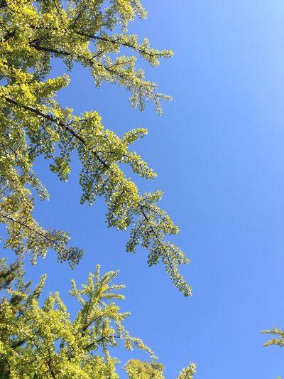 Spring Fresh Blue Sky