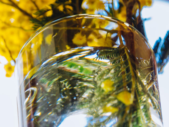 Glass - Material Transparent Close-up No People Still Life Selective Focus Glass Indoors  Nature Container Yellow Food And Drink Focus On Foreground Day Drinking Glass Water Tree Gold Colored Low Angle View