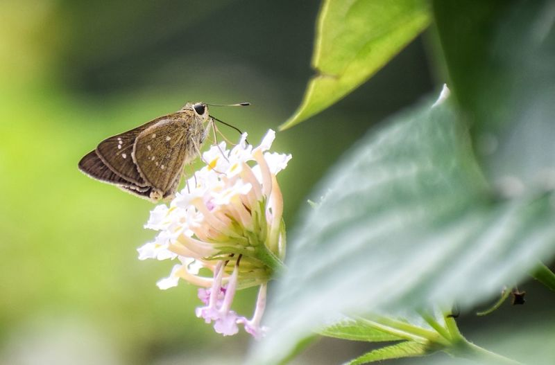 insect Wildlife