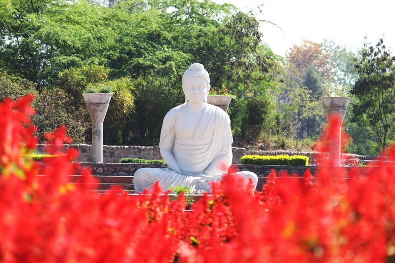 Lord Buddha Peace Garden Of Silence Nature Positive Vibes Positivity Religion Flower Red Statue Outdoors No People Tree