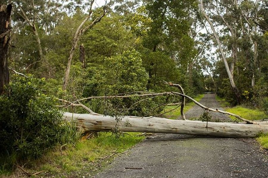 Roads I walked (3) Photography Nature Landscape Forest Road Blocked Tree Trees Deadtree Branch Explore Travel Victoria Australia Landscapephotography Naturephotography Naturelovers Jungle