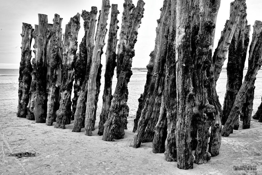 Beauty In Nature In A Row Large Monochrome Monochrome Photography Nature No People Non-urban Scene Outdoors Repetition Scenics Solitude Tranquil Scene Tranquility Tree Trunk WoodLand