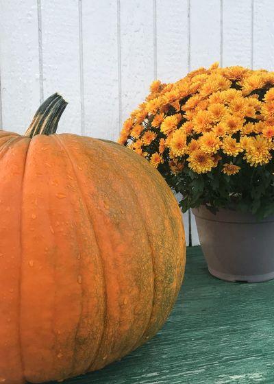 Close-up of orange flower pot on table