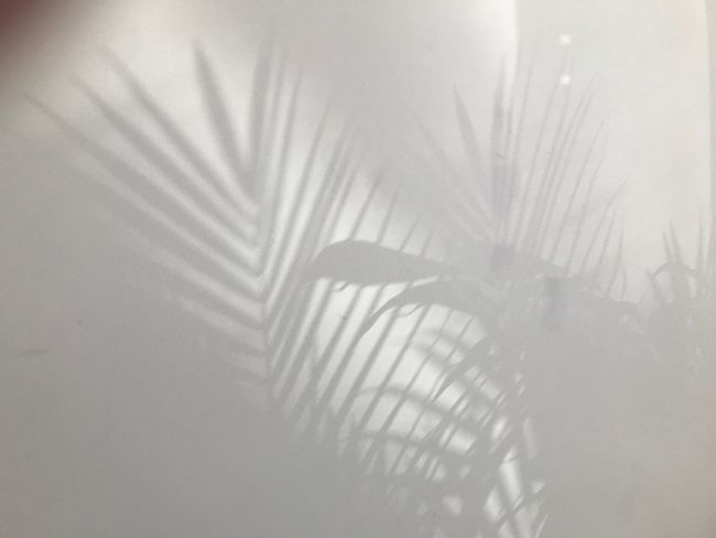 Shadow No People Day Outdoors Nature Close-up Indoor Plant Shadows Palm Shadows Shadows On The Wall