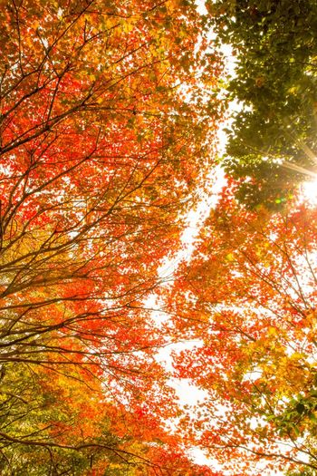 Autumn Colors Autumn Leaves Nature Tree