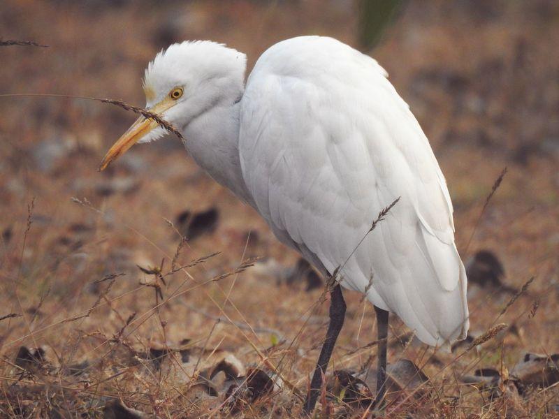 Animal Wildlife Bird Animal One Animal Close-up Nature No People Outdoors