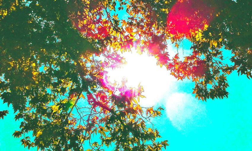 Loveallmyeyemfriends Walking Around Getting In Touch Soaking Up The Sun Taking Photos Enjoying The Sun Godsbeautifulcreation Check This Out