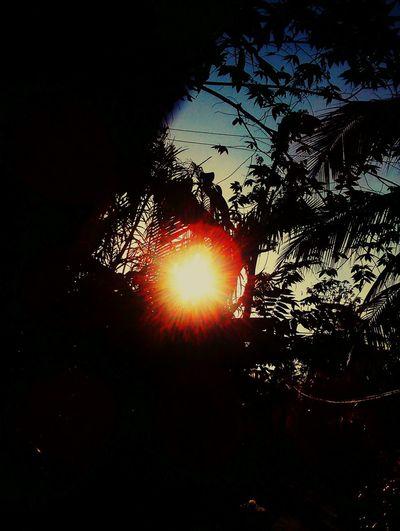 Sunnyday 🌸🌷🌿 Bymyphone Sky Viet Nam Plant