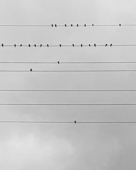 Birds Flock Of Birds Large Group Of Animals Flying Animal Themes Silhouette Outdoors Nature Sky No People Beauty In Nature Birdsflyinghigh Youknowhowifeel Blackandwhite Outdoor Photography Shadows & Lights Contemplating City Luxembourg Shadow Nature_collection Luxemburg Electric Lines Autumn Sunset Silhouettes
