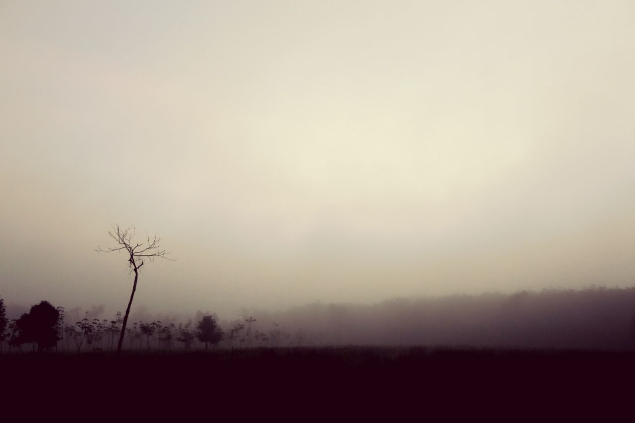 tranquility, nature, tranquil scene, landscape, tree, beauty in nature, solitude, majestic, scenics, outdoors, fog, mist, hazy, silhouette, lone, sky, no people, day