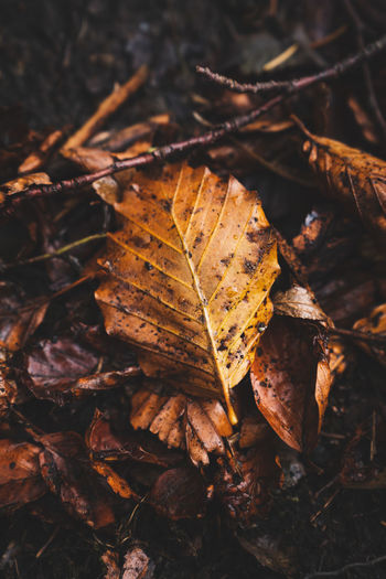 Leaf on the ground in autumn
