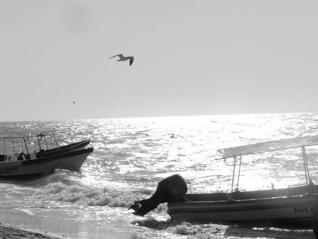 Beachphotography Mexico Water Beauty In Nature Fishing Celestun Blackandwhite Sea No People Travel Visiting