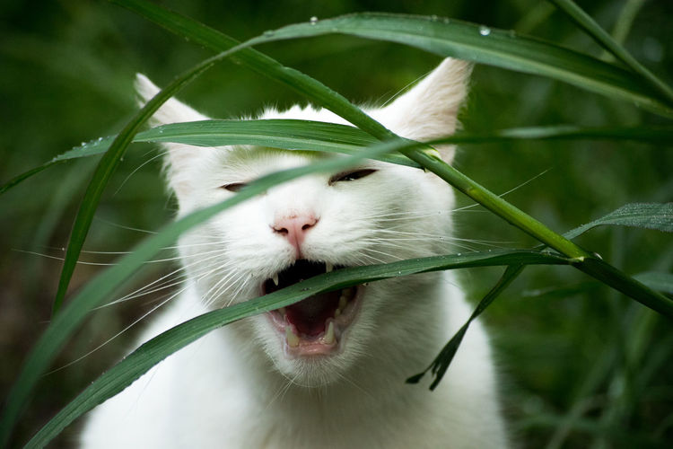 Close-Up Of Cat By Grass