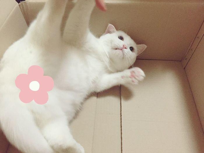 My eyes!!!!!!!!!!! (I keep your privacy boy) _ Cat Box_cat Boxlove Kittycat