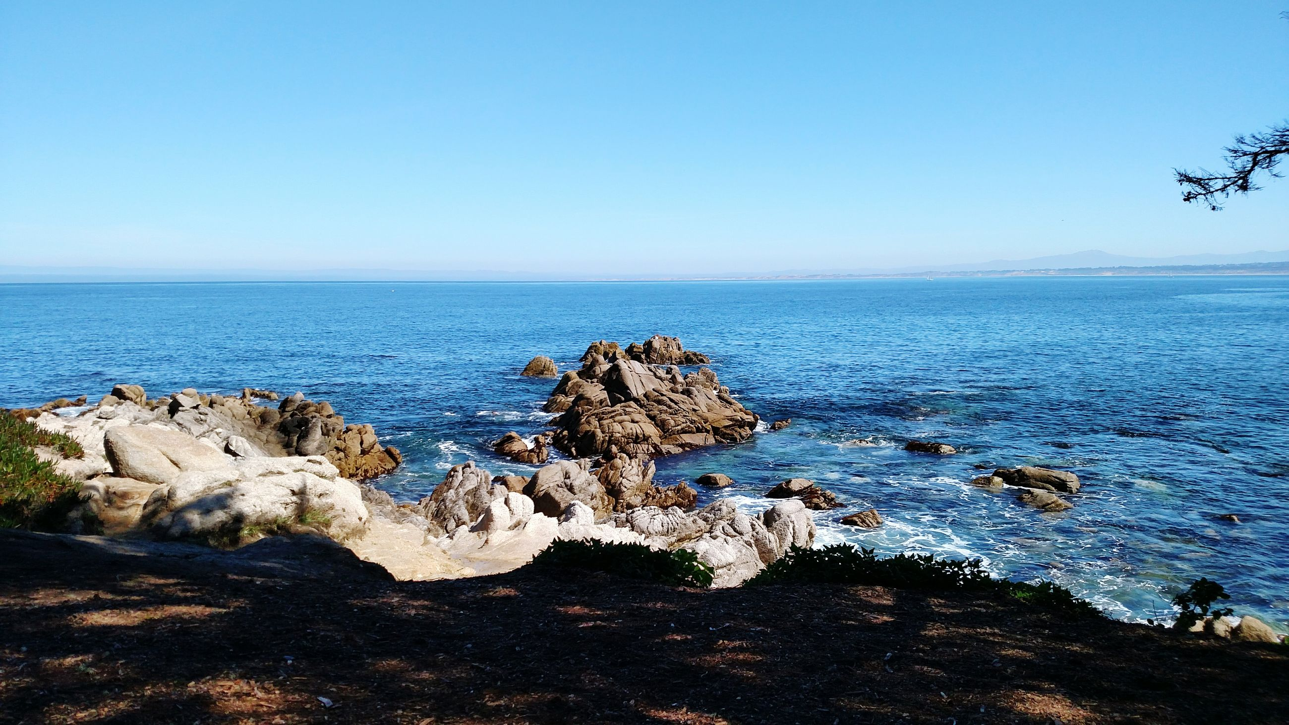 sea, horizon over water, clear sky, water, blue, nature, beauty in nature, beach, scenics, tranquility, no people, outdoors, day, sky, large group of animals