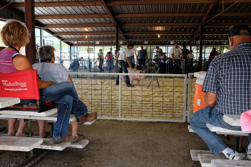 2016 Jefferson county Fair Fairbury Nebraska A Day In The Life Camera Work Countyfair Cultures Fair Farm Life Farmers Group Of People Holiday Lifestyles Medium Group Of People Nebraska Photography Pig Rural America Shooting Photos