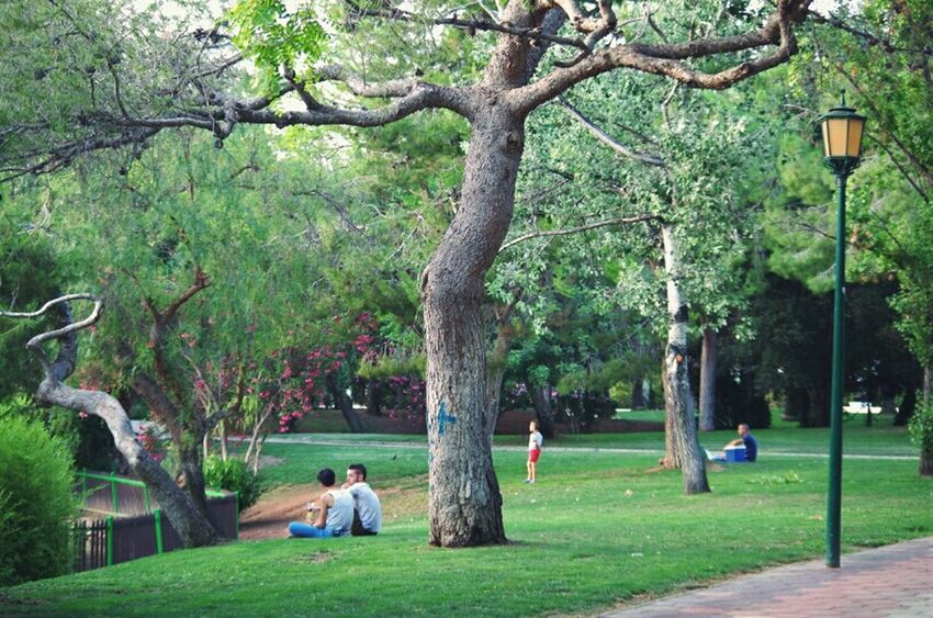 Chilling Park People Chilling Green Park Summer Beauty Contrast Shooting Time Pentax K-50 Town Nature Photography Photooftheday Writing With Light