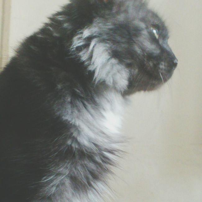 Cute Pets My Cat! aww she is sick..