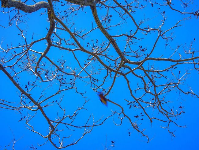 Take A Second Look..  Branches And Sky Bird On The Tree EyeEm Nature Lover Outdoor Photography Animals In The Wild Nature Harmony Birdwatching Details Of Nature Connected With Nature Details Textures And Shapes Tree Branches