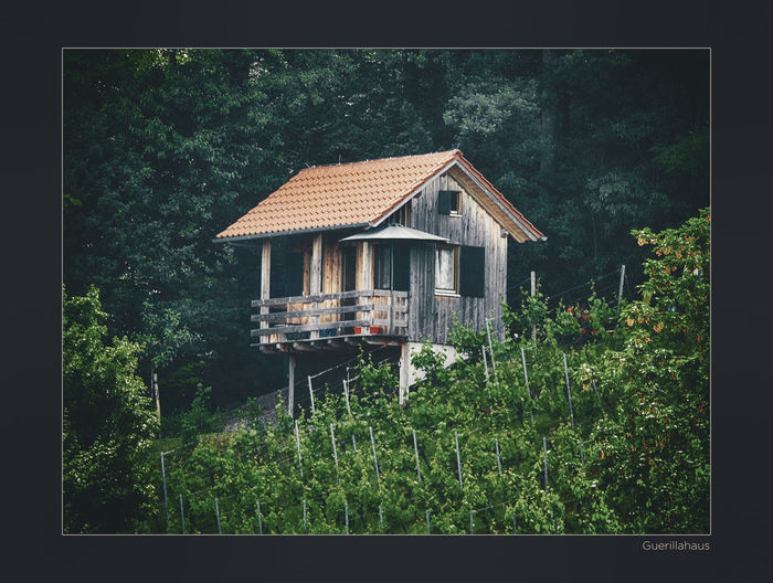 House amidst trees and plants in forest