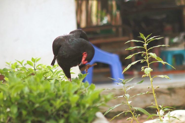 View of a bird against plants