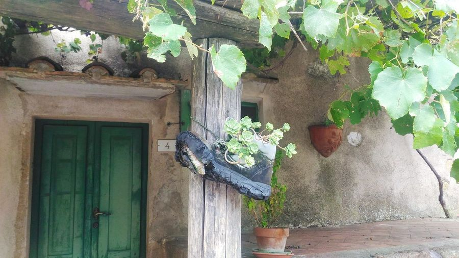 Alternative gardening Gardening Roccatederighi Under The Tuscan Sun Tuscany Tree Window Door Architecture Building Exterior Built Structure Plant Close-up Green Color Green Growing