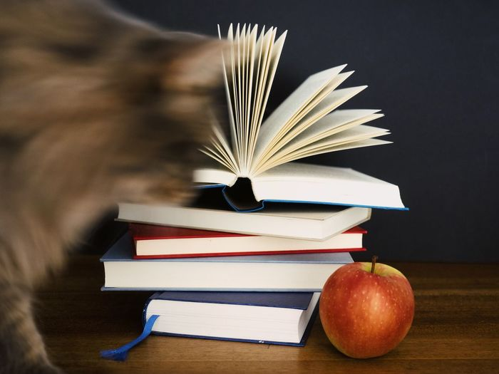 Book Publication Education Table Indoors  Literature Learning Open Paper Still Life Page No People Expertise Wisdom Apple - Fruit Stack Fruit Food Textbook Hardcover Book Studying Break Cat Homework