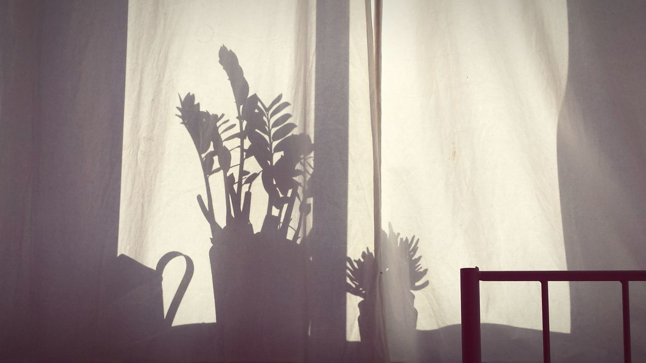 Shadow of potted plants on curtain at home