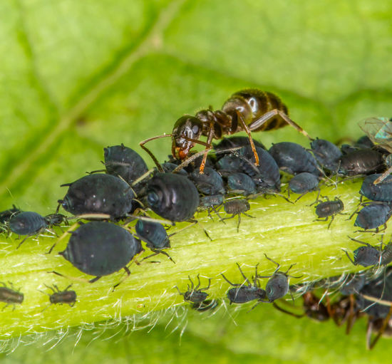 Close-up of insects on leaf