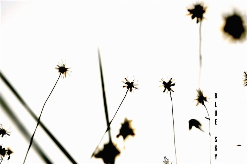 The Minimals (less Edit Juxt Photography) Diveuniverse EyeEm Best Shots